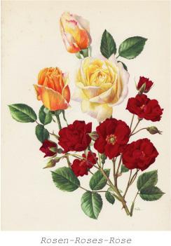 「薔薇」 ボタニカルアート展